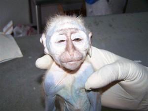 expérimentation animale